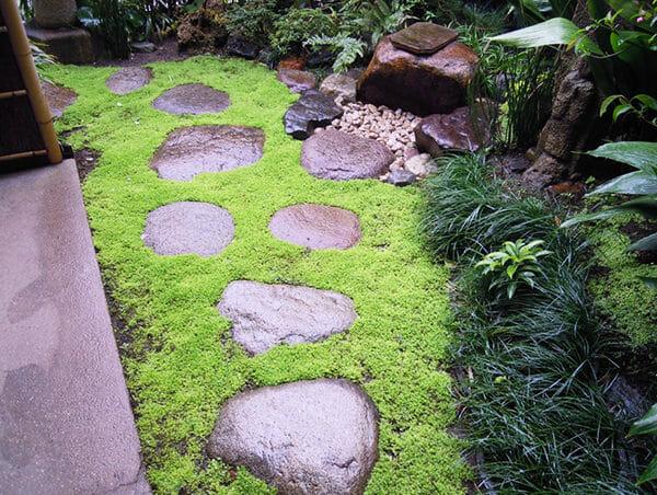 2020年卯月 涵養庵庭の芝