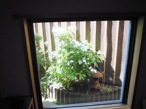 嵌め殺しの窓から見えるアジサイの花