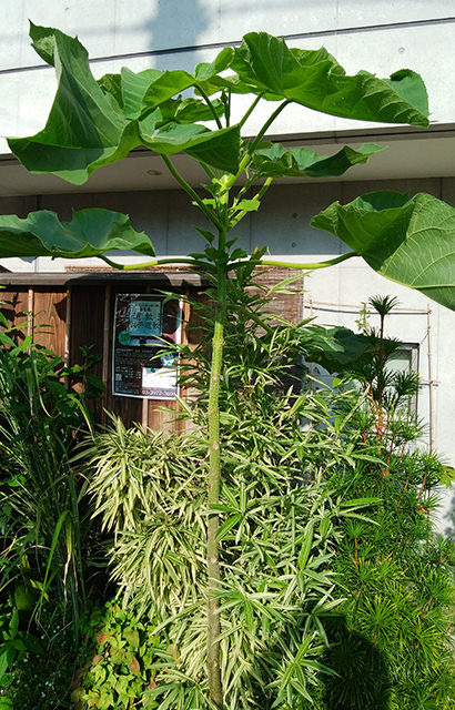 巨大な植物