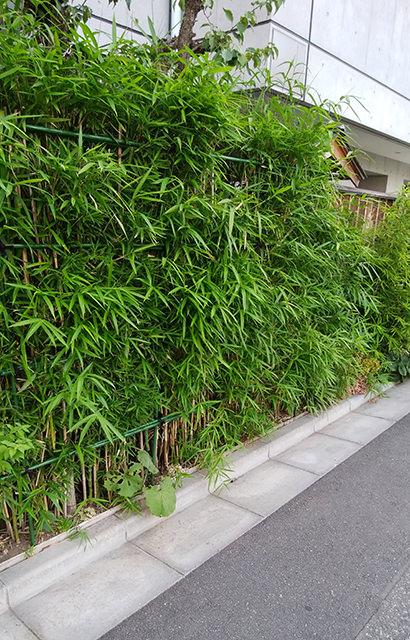 涵養庵の竹垣