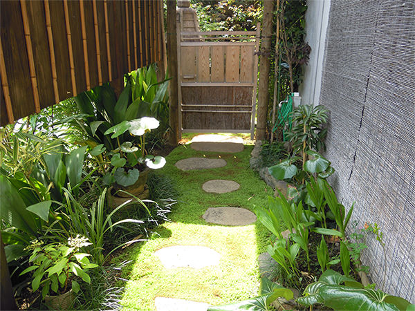 涵養庵の庭の苔