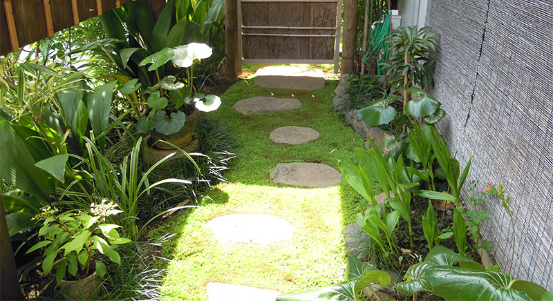 2021年涵養庵の庭の苔