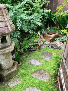 涵養庵_木戸から見たサツキの花と苔